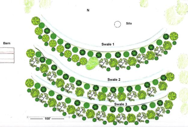 fruit-nut-tree-layout-3-ed